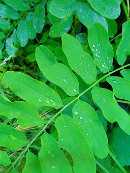 Branch, Sprig, Leaves, Foliage, Tree, Drops, Rain
