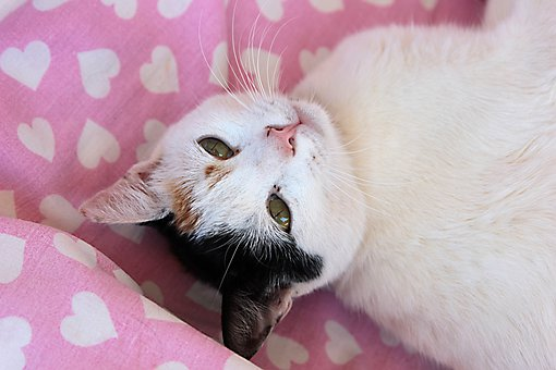 Cat, Kitty, Cute, Cats, Animal, Scott, Mammal