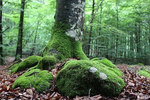 Tree Root, Forest, Forest Floor, Leaves, Nature