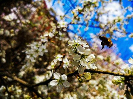 Photoshop, Nature, Photography, Photografie, Forest