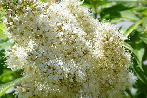 Flower, White, Invitation, Nature, Shrub