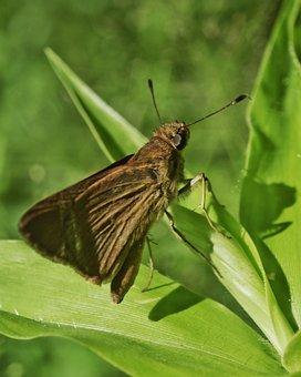 Arthropoda, Arthropod, Insecta, Insect