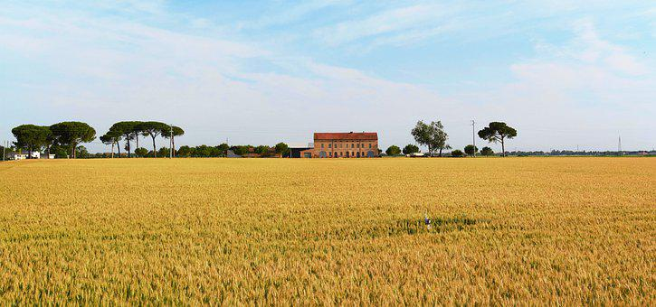 Wheat, Home, Corn, Harvest, House, Cereals