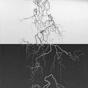 Art, Branch, Black And White, In Contrast, Wall