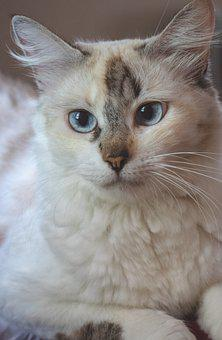 Cat, Female, Feline, Animal, Mammal, Pussy