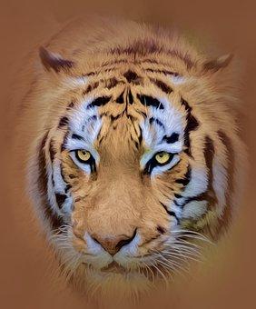 Tiger, Wildlife, Animal, Predator, Nature, Mammal
