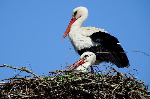 Animals, Nature, Birds, Stork, Spring