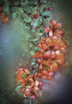 Flower, Flowers, Spring, Summer, Sprig, Garden, Color