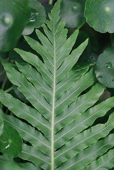 Symmetry, Leaf, Ferns, Garden