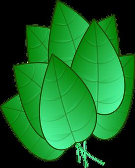 Leaves, Green, Bunch, Cluster, Nerves, Veins