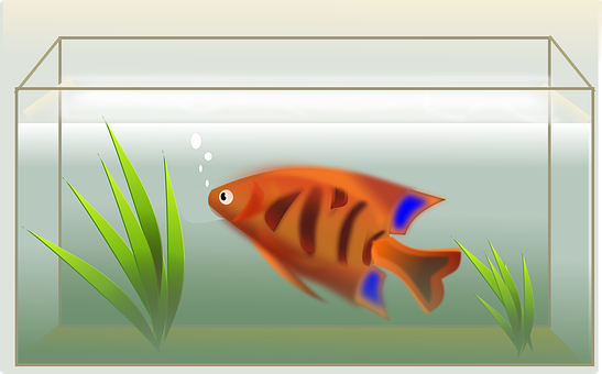 Fish, Tank, Swimming, Decoration, Water, Aquarium