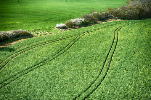 Field, Culture, Agriculture, Track Wheel, Green, Nature
