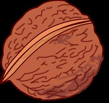 Essen, Foot, Fruit, Nut, Walnut, Nut