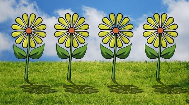 Different, Flower Bed, Flowers, Grass