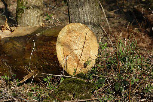 Tree, Sawn, Nature, Forest, Mood, Spring, Leaves, Wood