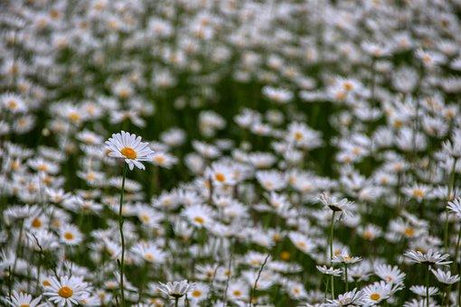 Marga Renon, Field, Meadow, Flowers, Wild Flower, Rural