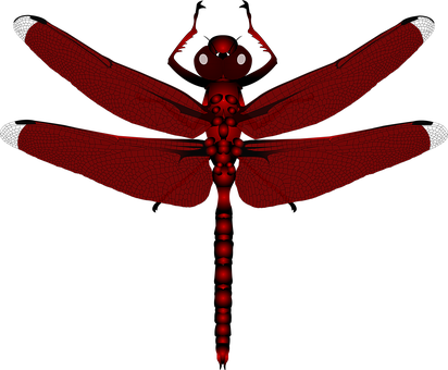 Dragonfly, Insect, Red
