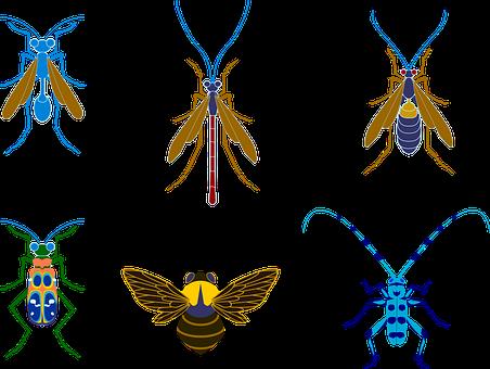 Bee, High Alum, The Bear Team, Key, Abu, Mosquitoes