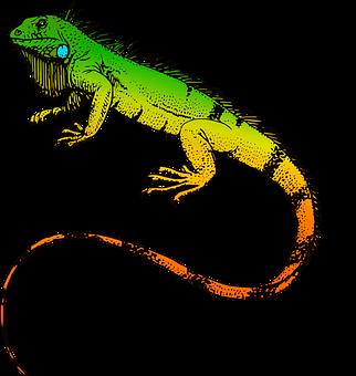 Reptiles, Iguana, Animal, Nature, Lizard, Wild