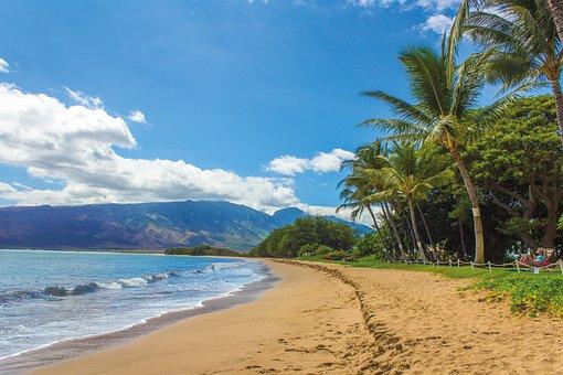 Beach, Landscape, Hawaii, Maui, Kihei, Sand, Palms