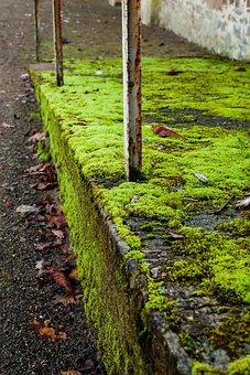 Ramp, Moss, Green, Rust, Railing, Concrete, City, Urban