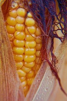 Corn, Corn On The Cob, Corn Plant, Corn On The Cob Hair