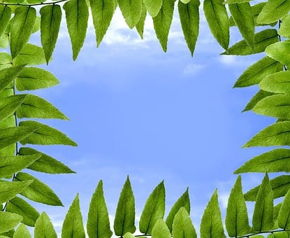 Foliage, Polypody, Sky, Blue, Cloud, Clouds, Nature