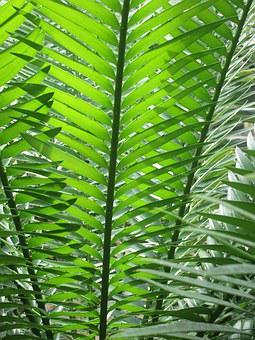 Fern, Green, Nature, Plant, Leaves, Forest, Leaf Fern
