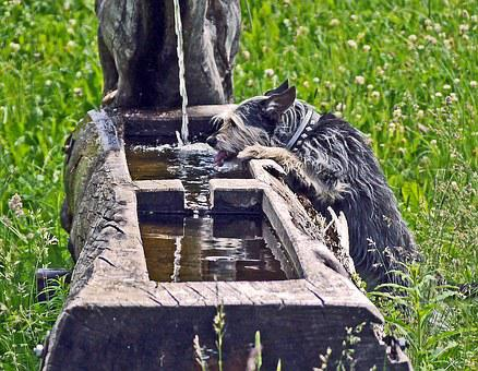 Fountain, Thirst, Terrier, Water Jet, Log, Hollowed Out