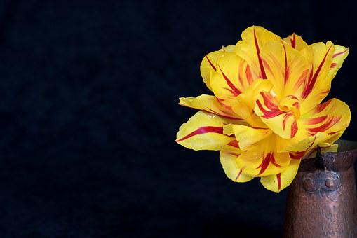 Tulip, Flower, Yellow, Red, Yellow Flower, Blossom