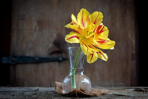 Tulip, Flower, Blossom, Bloom, Yellow Red, Vase, Glass