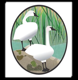 Swan, Waterfowl, Birds, White, Grass, Marsh