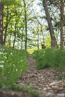 Spring, Path, Flowers, Forest, Plants, Plant, Nature
