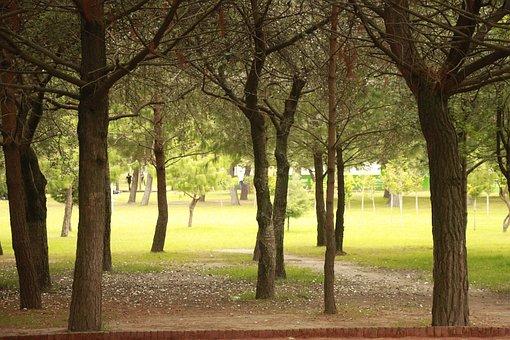 Forest, Trees, Park, Path, Landscape