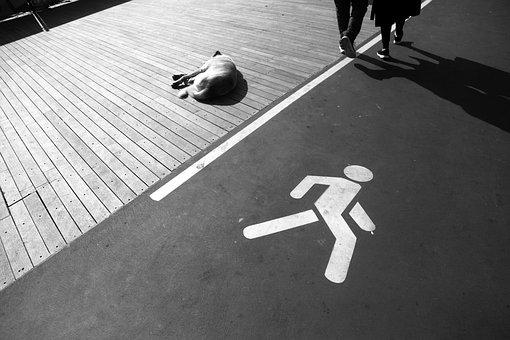 Walkway, Dog, Separator, Growth, Meadow