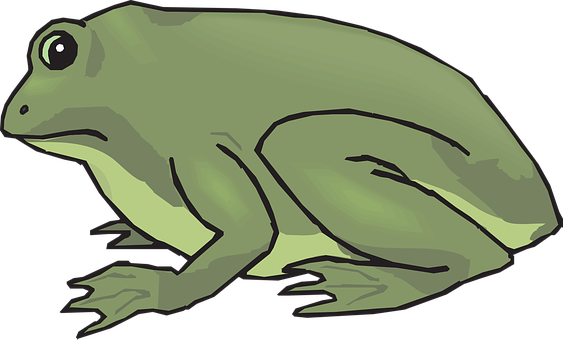 Frog, Amphibian, Tropical, Rainforest, Jungle, Exotic