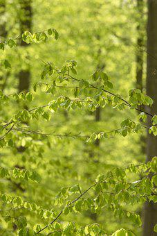Spring, Green, Nature, Leaves, Leaf