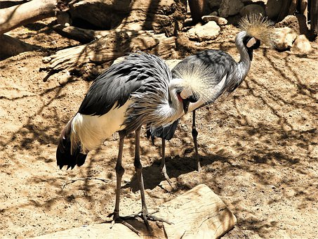 The Birds, Exotic, Zoo, Fuengirola