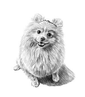 Dog, Pencil Drawing, Art, Portrait