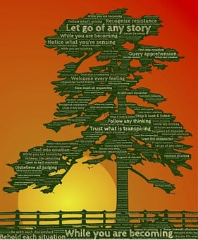 Tree, Awareness, Meditation, Practice, Relationship