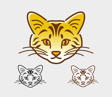 Cat, Animal, Mammal, Cute, Funny, Head