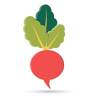 Healthy, Fresh, Beet, Root, Nature, Health, Salad