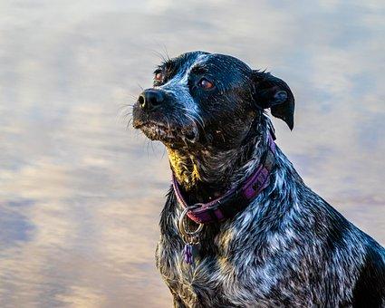 Dog, Beach, Portrait, Sea, Animal, Water
