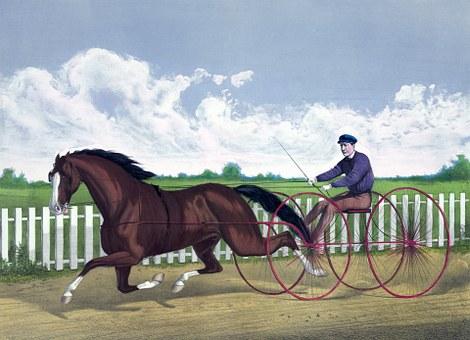 Horse, Trotting, Buggy, Racer, Cart