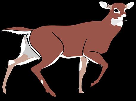 Deer, Animal, Mammal, Forest, Wild, Nature, Wildlife
