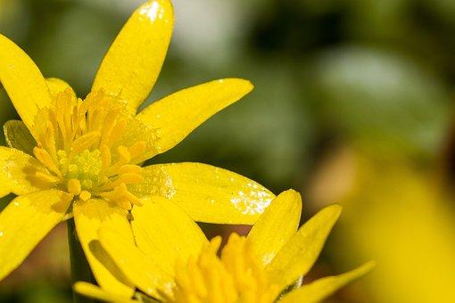 Yellow, Blossom, Flower, Sun, Nature, Garden, Plant