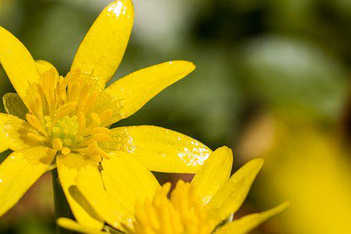 Yellow, Blossom, Flower, Sun, Nature