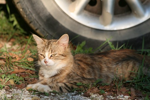 Cat, Kitty, Feline, Outdoors, Resting, Fur, Furry