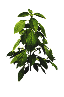 Green, Plants, Salad, Nature, Leaves, Garden, Grass