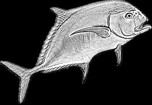 Pompano Fish, Fishing, Game Fishing, Sea, Ocean Fishing